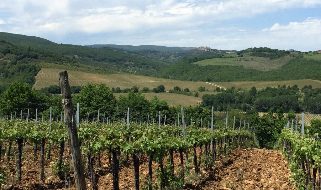 Special Activities - Winery Tour
